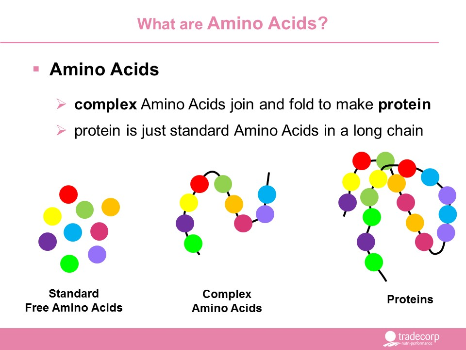 Simplified diagram representing the relationship between Amino Acids Peptides and Proteins